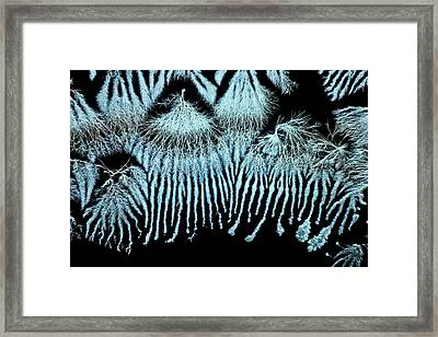 Biotin Crystals Framed Print by Antonio Romero