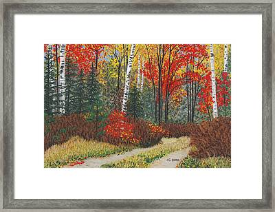 Birch Trail Framed Print
