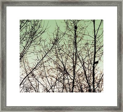 Birds Framed Print by A K Dayton