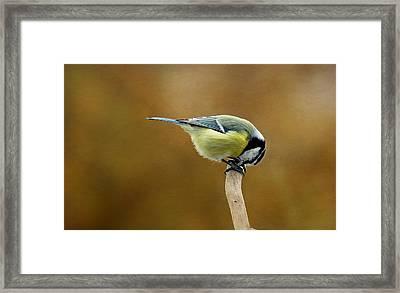 Birds Framed Print by Heike Hultsch