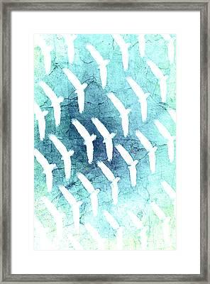 Birds Of Prey Framed Print by Tommytechno Sweden
