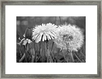 Birth Life Death Framed Print by Frozen in Time Fine Art Photography