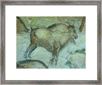 Bison Buffalo Framed Print by Unknown