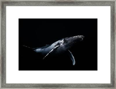 Black & Whale Framed Print