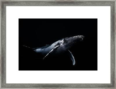 Black & Whale Framed Print