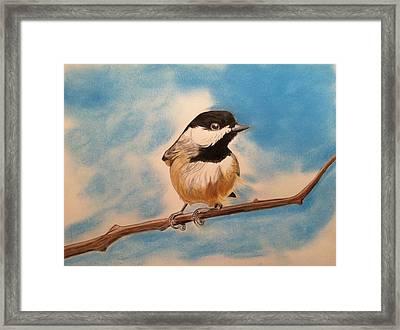 Black Capped Chickadee Framed Print by Tony Clark