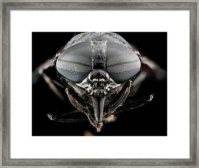 Black Horse Fly Framed Print by Us Geological Survey