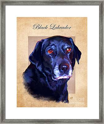 Black Labrador Art Framed Print by Iain McDonald