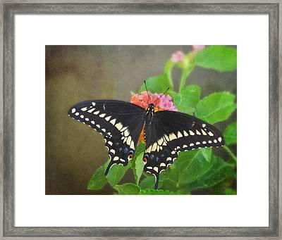 Black Swallowtail On Lantana Framed Print
