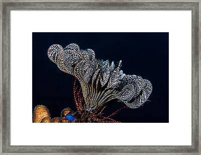 Black Tie Event Framed Print by Paula Marie deBaleau