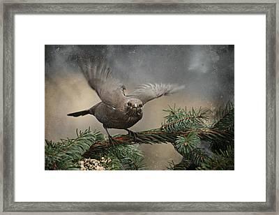 Blackbird Framed Print by Heike Hultsch