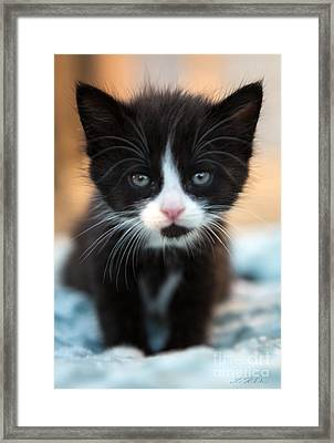 Blake And White Kitten Framed Print