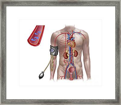 Blood Pressure And Circulatory System Framed Print