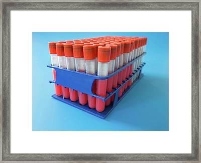 Blood Samples In Test Tubes Framed Print by Wladimir Bulgar