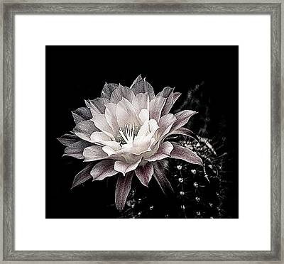 Blooming Cactus Framed Print