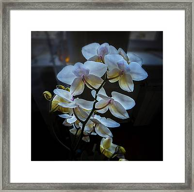 Blooming Orchid Framed Print