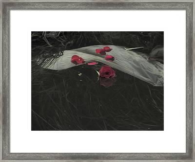 Blossom Rain 29 Framed Print by Georg Kickinger