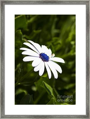 Blossoming Harmony Framed Print