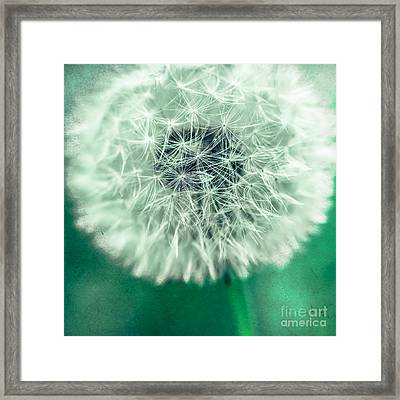 Blowball 1x1 Framed Print by Hannes Cmarits