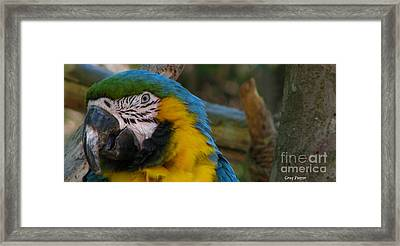 Blue And Gold Framed Print by Greg Patzer