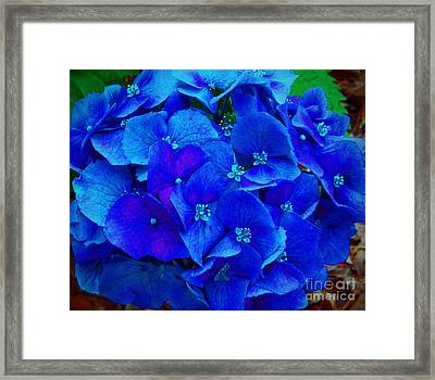 Blue Beauty Framed Print by Annette Allman