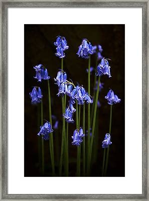 Blue Bells Framed Print by Svetlana Sewell
