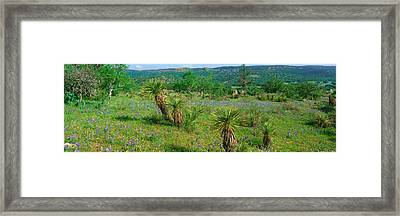 Blue Bonnets In Hill Country, Willow Framed Print