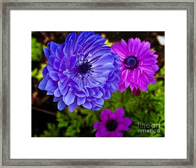 Blue Flower Framed Print by Michael Fisher