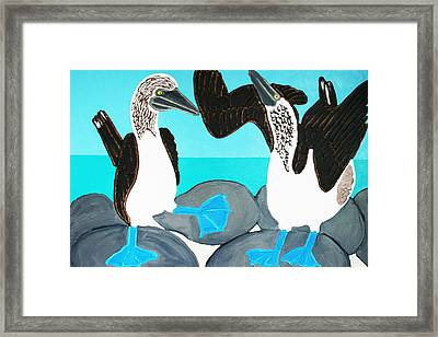 Blue Footed Boobies. Framed Print