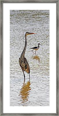 Blue Heron And Stilt Framed Print