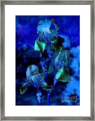 Blue Irises Framed Print by Carol Groenen