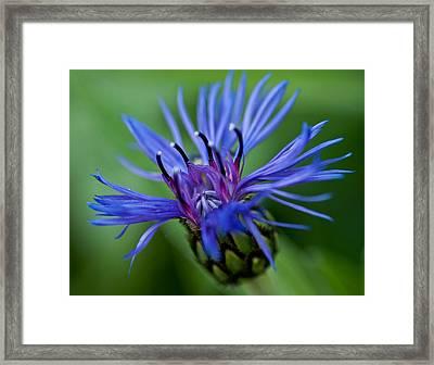Blue Framed Print by Jerri Moon Cantone