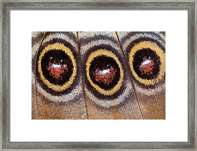Blue Morpho Butterfly Underwing Abstract Framed Print