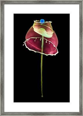 Blue Pearl Framed Print by Jaroslaw Blaminsky