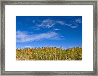 Blue Sky Framed Print by Jason KS Leung