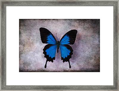 Blue Wings Framed Print by Garry Gay
