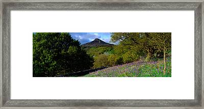 Bluebell Flowers In A Field, Cleveland Framed Print by Panoramic Images