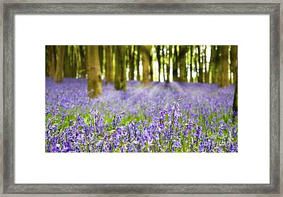 Bluebell Wood Framed Print by Jane Rix