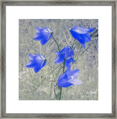 Bluebells Framed Print by Sylvia  Niklasson