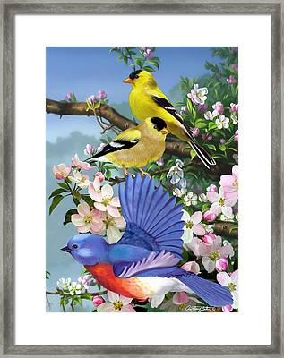 Bluebird And Goldfinch Framed Print