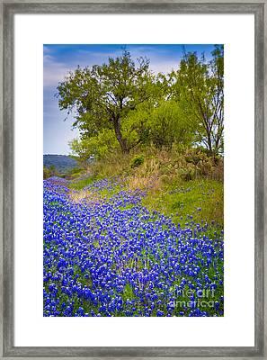 Bluebonnet Meadow Framed Print by Inge Johnsson