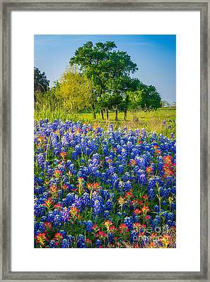 Bluebonnet Pasture Framed Print by Inge Johnsson