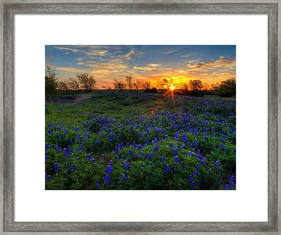 Bluebonnets Framed Print by Mark Alder