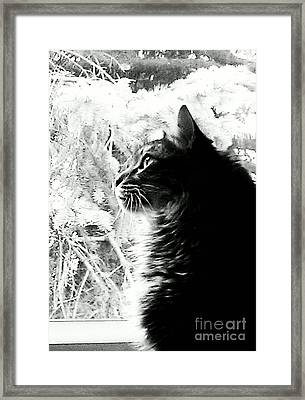 Framed Print featuring the photograph Bo by Jacqueline McReynolds