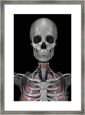 Bones Of The Head Framed Print