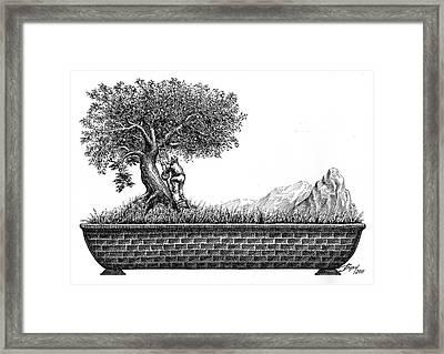 Bonsai Framed Print by Boyan Donev