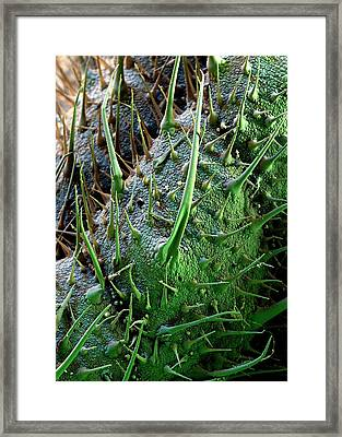 Borage Trichomes Framed Print