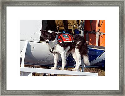 Border Collie Search And Rescue Dog (mr Framed Print