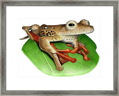 Borneo Red Flying Frog Framed Print by Roger Hall