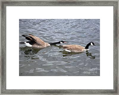 Bossy Canada Goose Framed Print by Susan Wiedmann